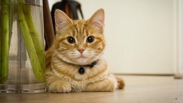 Rahasia Kucing Menurut Islam dan Medis