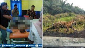 Tewas Diterkam Harimau